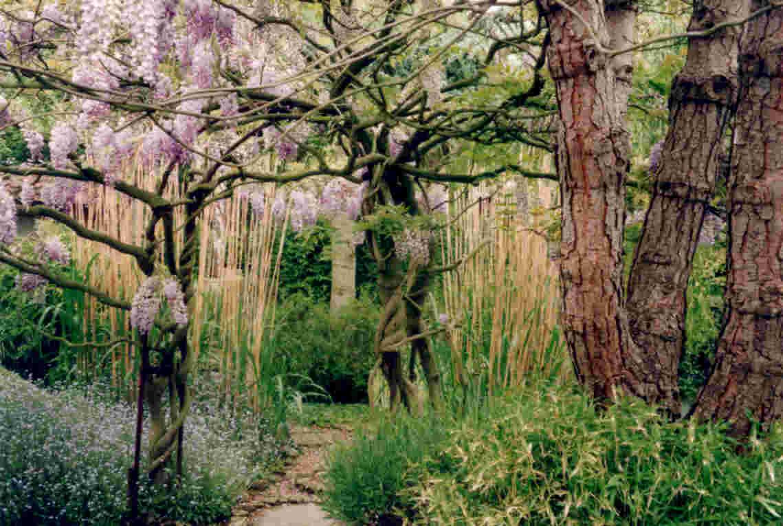 pureland japanese garden